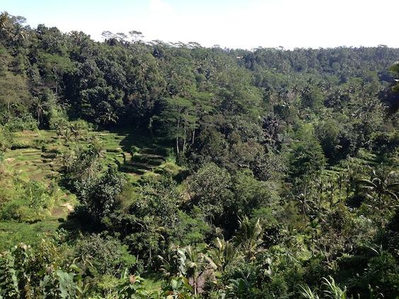 Forêt primaire près d'Ubud Bali et rizières