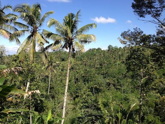 Forêt primaire près d'Ubud Bali